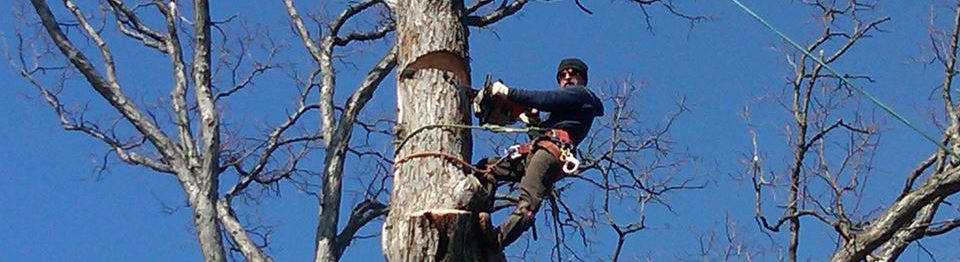 BJS Tree Service LLC